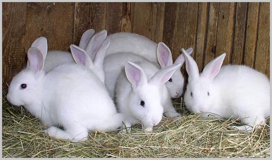 Compro Linea Biologica - Area Conigli
