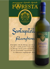 Compro Vino Santagatella