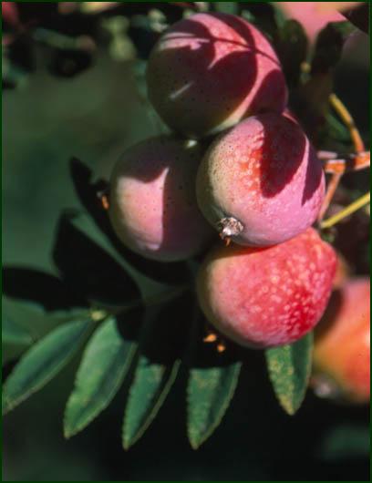 Acquistare Frutta