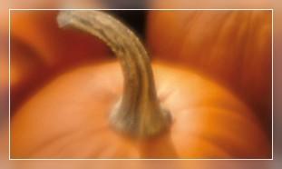 Buy Pumpkin