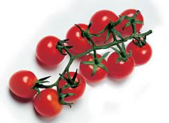 Acquistare Pomodorino Ciliegino categoria Cherry
