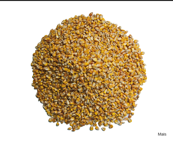 Le biomasse > Mais