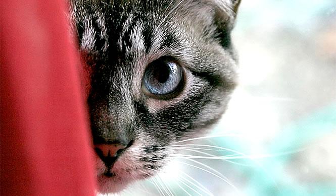 Acquistare Alimento per gatti