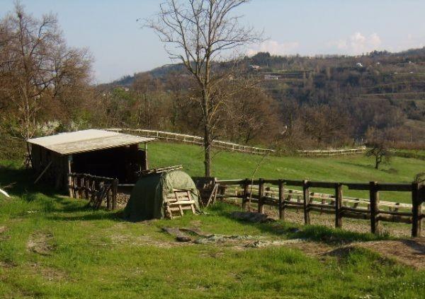 Acquistare Terreno agricolo / coltura in Vendita a Bertinoro