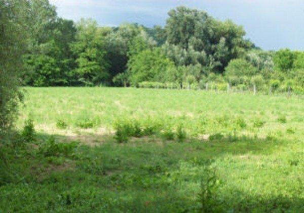 Acquistare Terreno agricolo / coltura in Vendita a Orte
