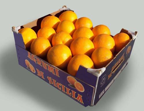 Copy Blond Orange, Valencia