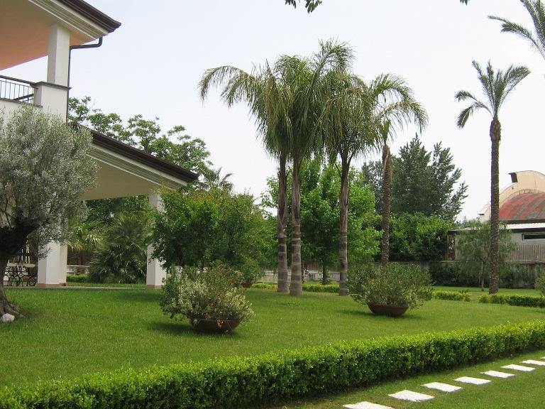 piante da giardino: piante profumate da giardino consigli pratici ... - Piante Da Giardino Sempreverdi Alto Fusto