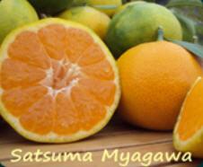 Satsuma Myagawa