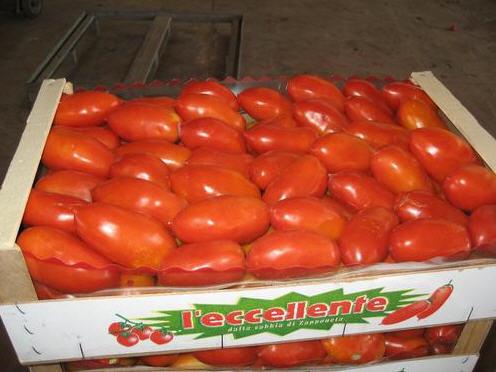 Pomodoro San Marzano Rosso
