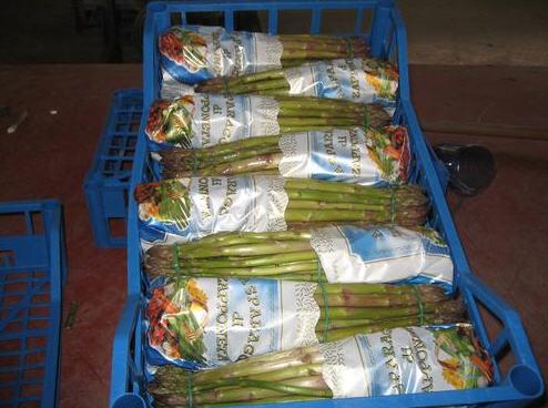 Acquistare Asparago Verde In Mazzi