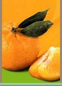 Clementine, Mandarini