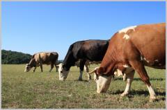 Forage for farm animals