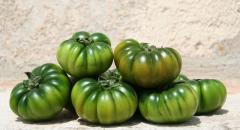 Pomodoro Merinda+altre 4 varieta verdi