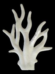 Corallo marino (03AM201)