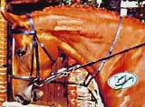 Articoli per equitazione: tideman