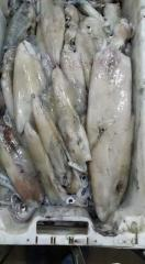 Pesce fresco di primissima scelta,anche congelato