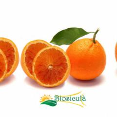 Arancia Rossa- Blond Orange