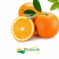 Blond Orange- Arancia Bionda - Valencia