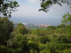 Terreno Agricolo VIBO VALENTIA (VV)