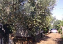 Terreno agricolo / coltura in Vendita a Velletri