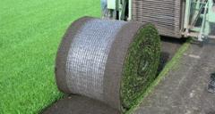 L'erba sintetica
