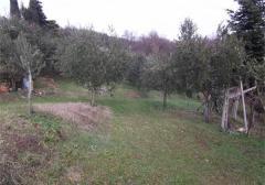 Terreno agricolo / coltura in Vendita a Verona
