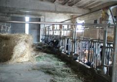 Azienda agricola in Vendita a Neviano Degli