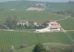 Terreno agricolo / coltura in Vendita a Castello