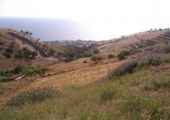 Terreno agricolo / coltura in Vendita a Reggio Calabria