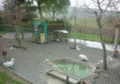 Azienda agricola in Vendita a Civitanova Marche