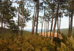 Terreno edificabile residenziale in Vendita a Vado