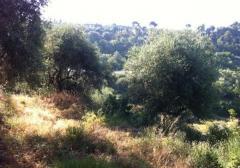Terreno agricolo / coltura in Vendita a Seborga -