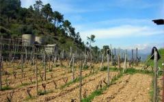 Terreno agricolo / coltura in Vendita a
