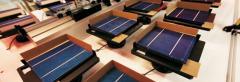 Plants that use solar energy