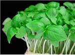 Soft salade e Fiori edibili