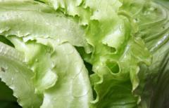 Varietà Verdure