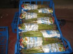 Asparago Verde In Mazzi