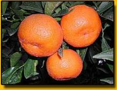 Clementine Monreale
