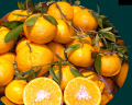 Mandarini Primasole, Nova, Ciaculli