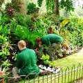 Giardiniere, pulizia, sgombero, imbiancatura