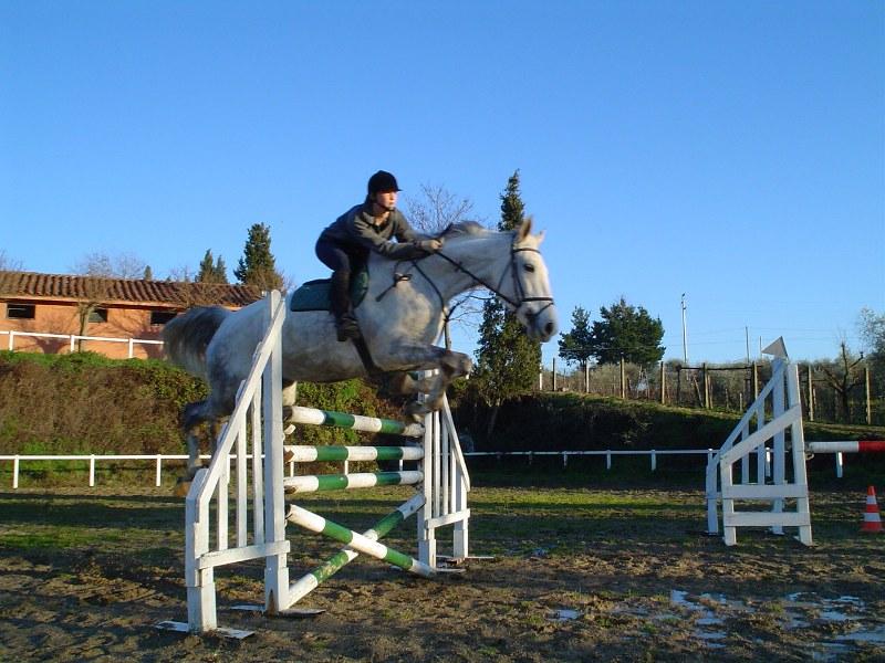 Ordine Equitazione