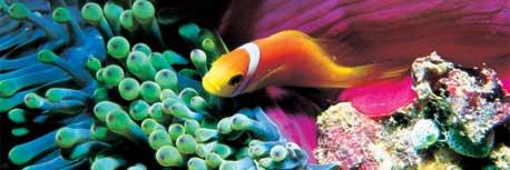 Ordine Africa e Oceano Indiano: Maldive