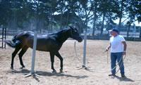 Ordine Comunicazione naturale con il cavallo