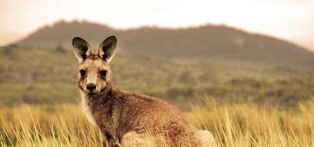 Ordine Australia