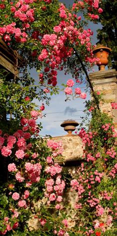 Ordine Appartamenti per una vacanza, Villa Le Pergole