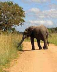 Sudafrica. Ilrichiamo del continente nero